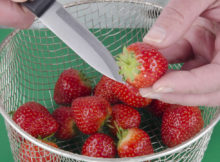 You Pick Strawberries Available at Kiteley Farms