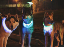 Halo Lights