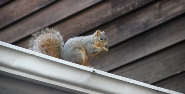 How To Prevent Wild Animals From Entering Your Home